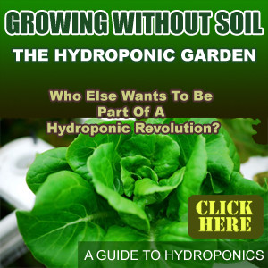 300by300-01 hydroponics hydroponics gardening-everything you need to know square300
